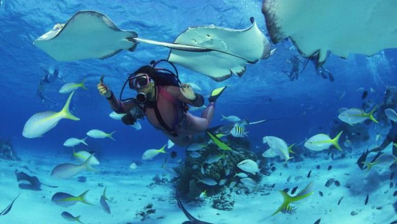 Ilustrasi diving (Thinkstock)