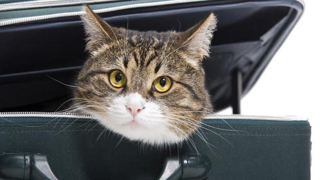 Virus Flu Burung Langka Jangkiti Kucing di New York