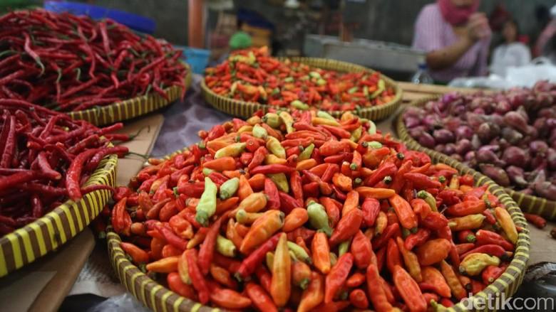 Serba Salah, Harga Rawit Merah Terus Turun Petani Berpotensi Merugi