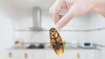 Disebut untuk Obat Kulit, Pasangan Ini Bawa Ratusan Kecoa ke Bandara
