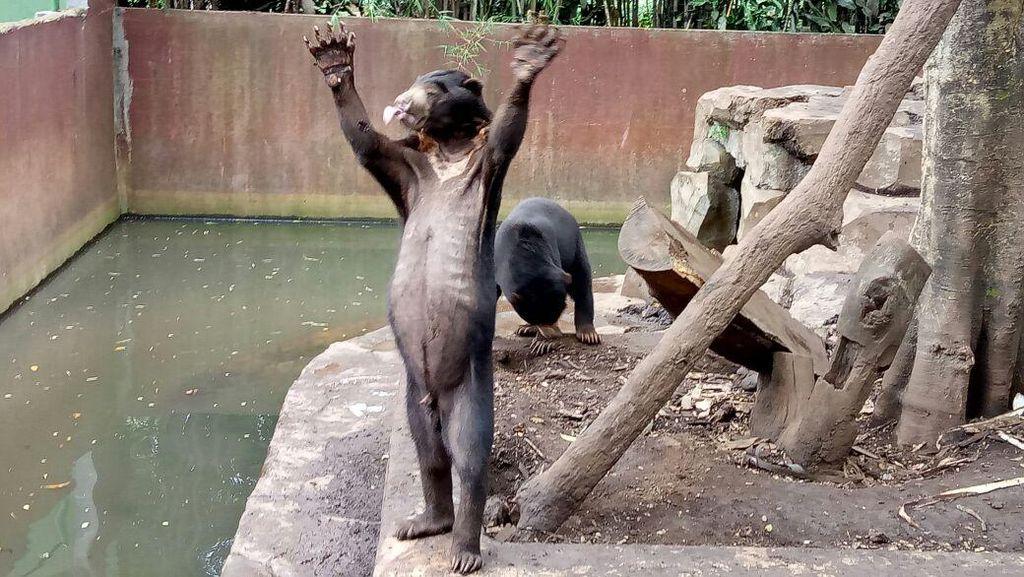 Bunbin Bandung Ungkap Dugaan Penipuan Donasi Beruang Kardit di Amerika