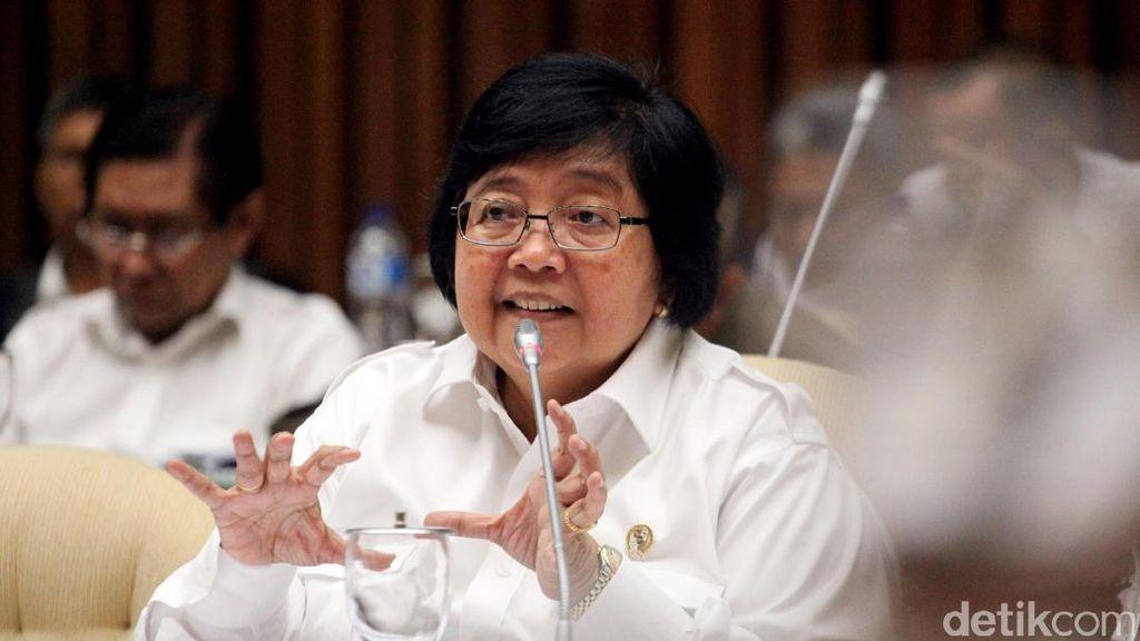 Beruang Sehat, Menteri Siti Minta Fasilitas KBB Bandung Diperbaiki