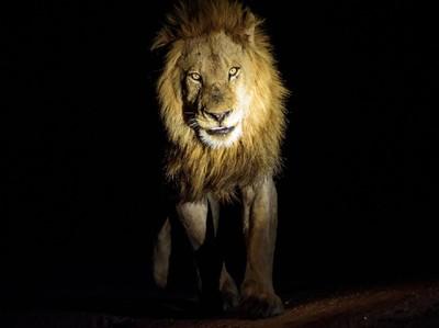 Mencari Singa & 4 Wisata Malam Paling Menantang Nyali di Dunia