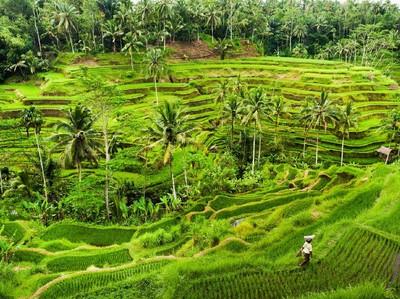 Bangga! Ubud Masuk 10 Besar Kota Terbaik se-Asia