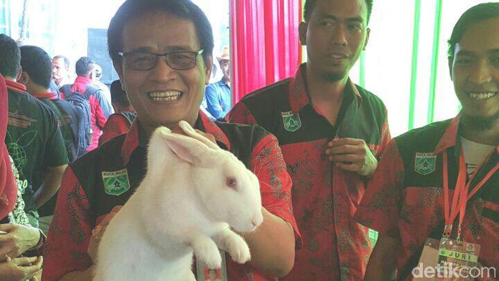 Ternak Kelinci untuk Alternatif Daging Sapi dan Kerbau
