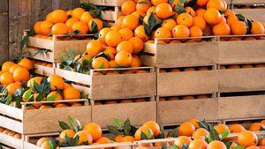 Sebelum Membeli, Ini Harga Jeruk Santang Hingga Ponkam di Pasaran