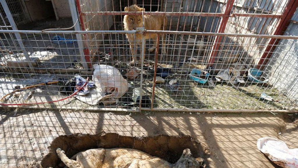 Miris, Begini Kondisi Kebun Binatang di Mosul