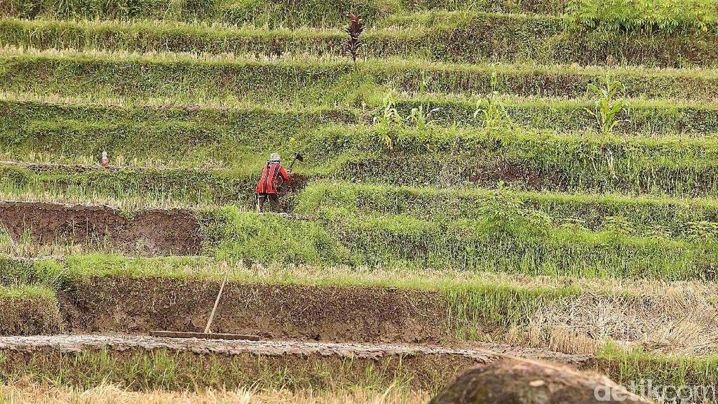 Ini Penyebab Kontribusi Pertanian ke Ekonomi RI Masih Rendah