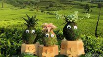 Planter Craft, Lumut Yang Menghasilkan Puluhan Juta Rupiah