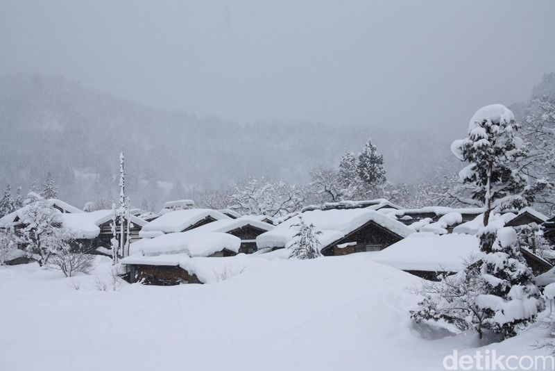 Shirakawa Go adalah salah satu tempat wisata di Jepang yang ditetapkan sebagai warisan budaya dunia oleh United Nations Educational, Scientific and Cultural Organization (UNESCO). Beberapa rumah di sana yang masih dibangun dengan cara tradisional yaitu dari kayu yang diperoleh di hutan dan atapnya terbuat dari semacam jerami (Firdaus/detikTravel)