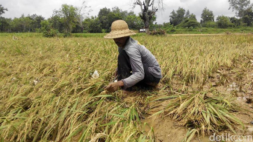 Kementan Tingkatkan Minat Bertani untuk Turunkan Pengangguran di Desa
