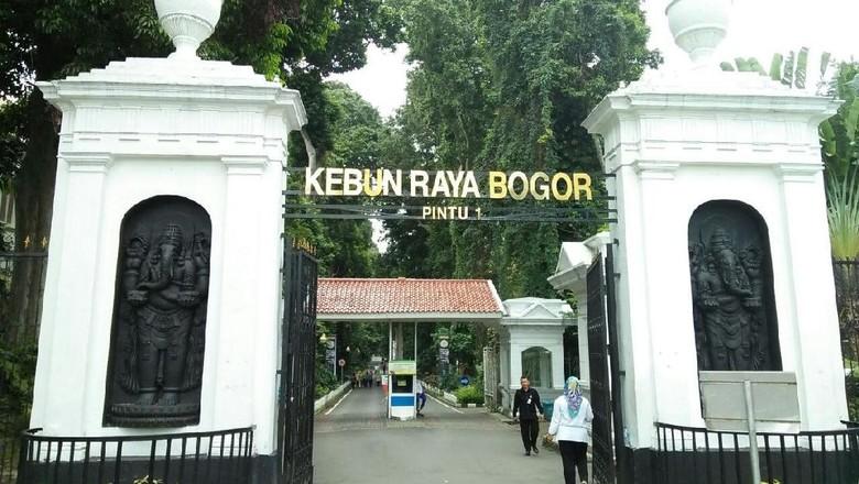 Foto: Ilustrasi Kebun Raya Bogor (Melissa Bonauli/detikTravel)