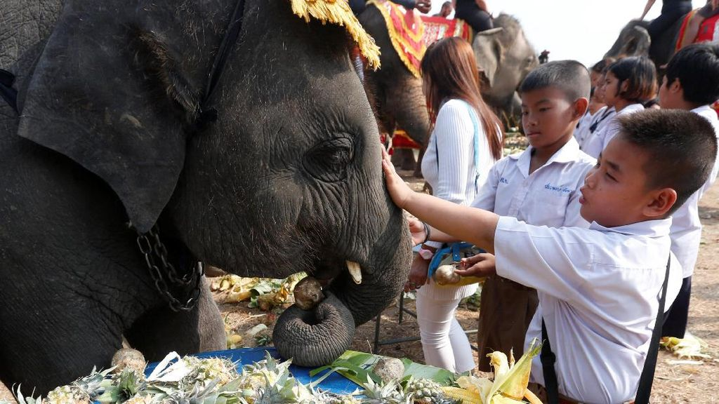Keseruan Warga Thailand Rayakan Hari Gajah
