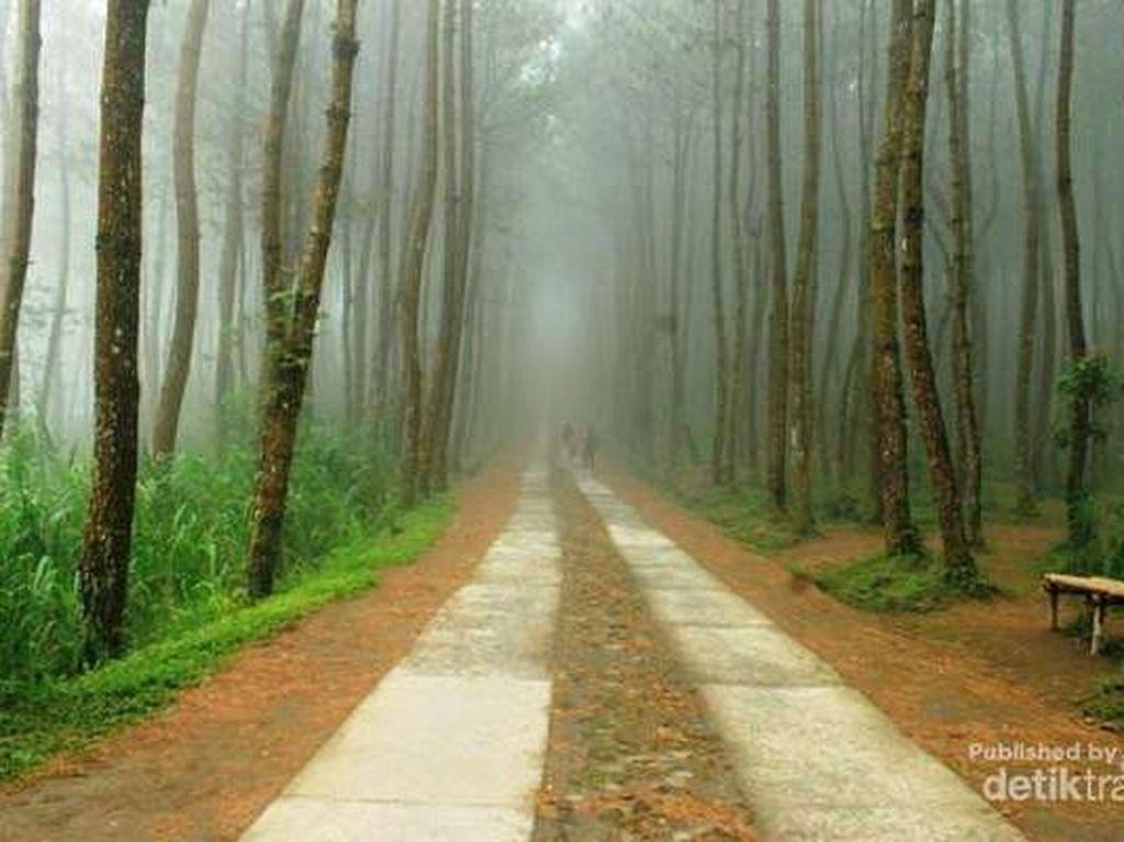 Hutan Pinus Pringapus di Trenggalek (Anton Tri Sutrisno/dTraveler)