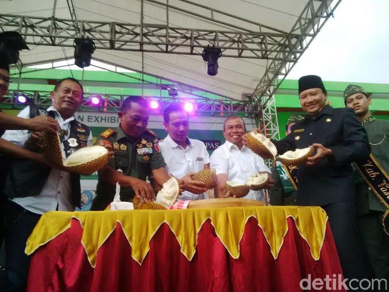 Festival Durian di Pasuruan Habiskan 48 Pikap Durian Kakap