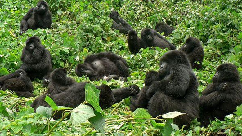 Foto: Africa Adventure Safaris/Facebook
