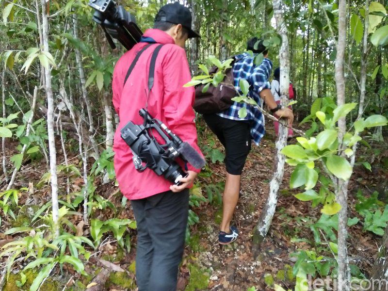 Untuk melihat cendrawasih traveler harus treking selama 30 menit ke dalam hutan. Traveler akan diminta oleh guide untuk tidak bersuara dan mengendap-endap, Karena cendrawasih sangat peka terhadap suara dan gerakan (Bonauli/detikTravel)
