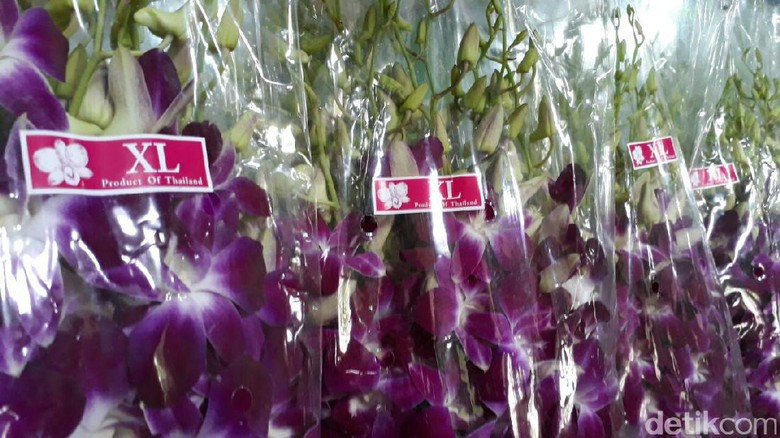 RI Impor Anggrek dari Thailand, Ini Penampakannya