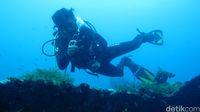 Diving di Tulamben (Kamal/detikTravel)