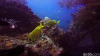 Ikan-ikan yang tinggal di Tulamben (Kamal/detikTravel)