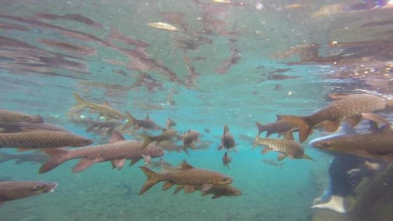 Ikan-ikan di Banyu Biru (Muhajir Arifin/detikTravel)