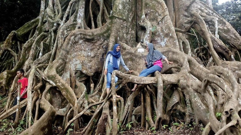 Foto: Pohon Akar Seribu di Mojokerto (Enggran/detikTravel)