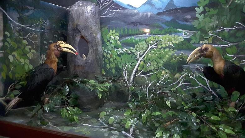 Foto: Diorama burung rangkong di Timika (Radian/detikTravel)