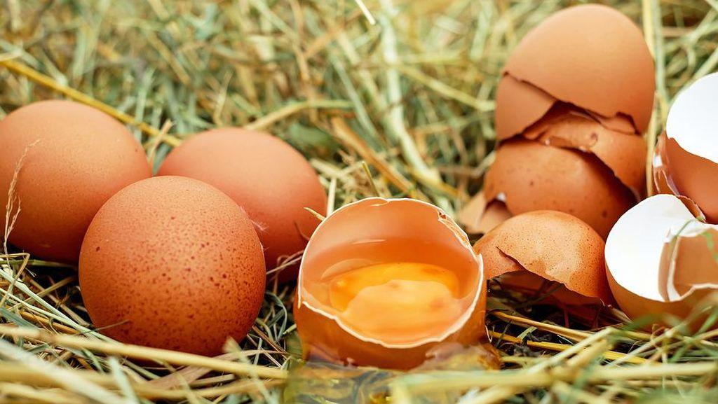 Duluan Mana, Telur atau Ayam? Intip di Sini Jawabannya!