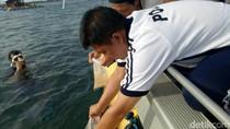 10.852 Benur Lobster Dilepasliarkan di Bangsring Underwater