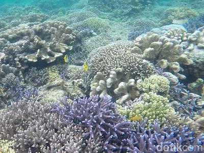 Tak Cuma Ubur-ubur Langka, Kakaban Juga Punya Spot Snorkeling Eksostis