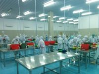 Ekspor Telur Ikan Terbang, Pria Ini Kantongi Omset Rp 364 Miliar