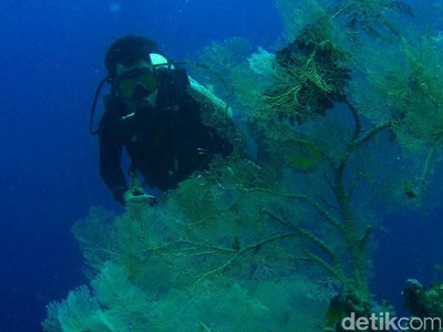 Gorontalo, Surganya Spot Fotografi Bawah Laut Keren