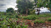 Jalan tikus yang kerap dipakai untuk menyelundupkan barang dari RI ke Timor Leste
