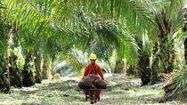12 Ribu Orang Ancam Lawan Eksekusi Kebun Sawit 2.823 Hektare