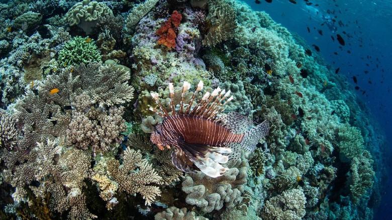 Foto: Pesona bawah laut Wakatobi (Thinkstock)