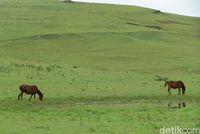 Padang rumput Fulan Fehan