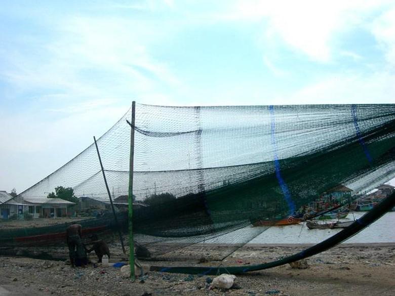 Kenapa Cantrang Di Larang Ini alasan mengapa Susi Di Demo ANNI, nelayan protes susi tentang cantrang