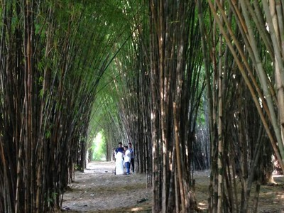 Dikira di Jepang, Tahunya Ini Hutan Bambu di Surabaya Rek!
