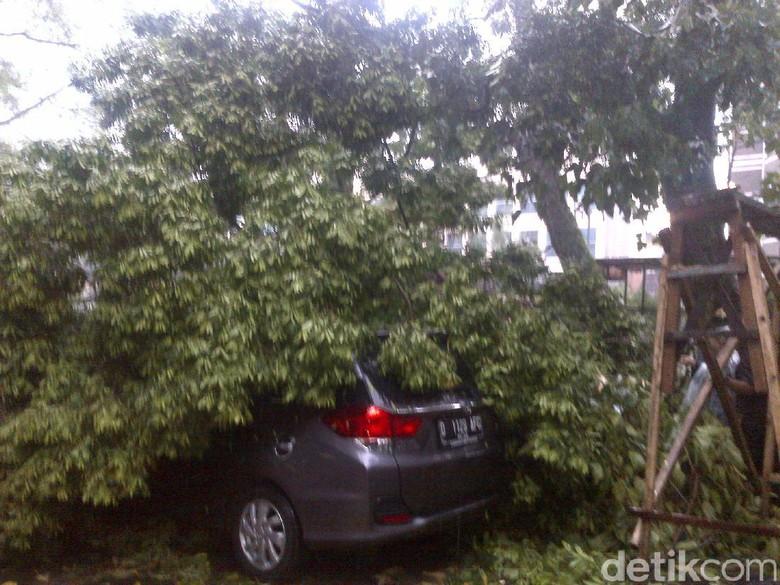 Musim Hujan, Pemkot Bandung Waspadai Pohon Berumur 50 Tahun