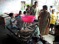 Warga Cirebon Tangkap Piton Sepanjang 4,5 Meter di Sarang Walet