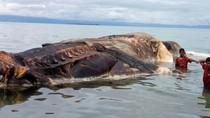 Menanti Hasil Identifikasi KKP soal Hewan Raksasa di Laut Maluku