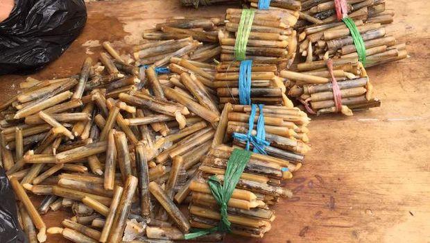 Mumu alias kerang bambu.