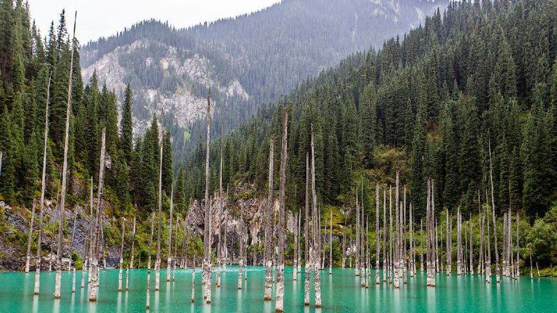 Danau berisikan hutan Kazakhstan