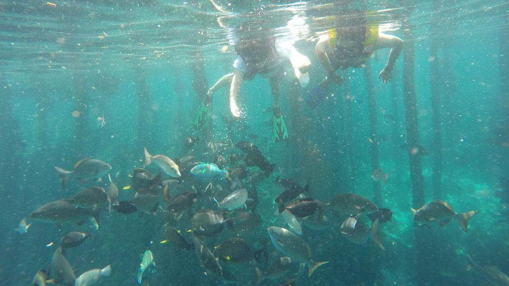 Bawah Laut Raja Ampat, di Dermaganya Saja Kayak Begini