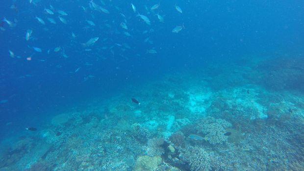Ikan-ikan di Pulau Kri