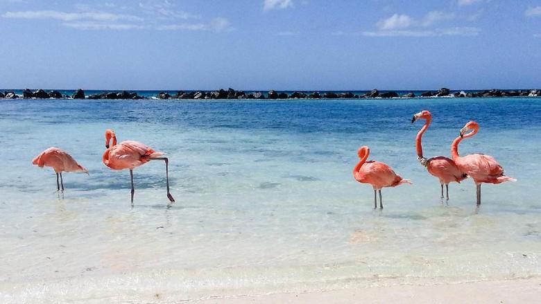 Ilustrasi burung flamingo (Thinkstock)
