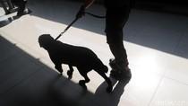 Anjing Pelacak Sisir Stasiun Pasar Senen