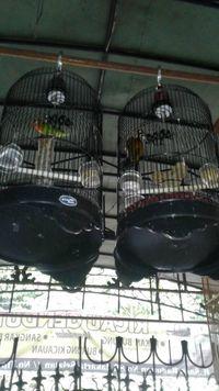 Penitipan Burung