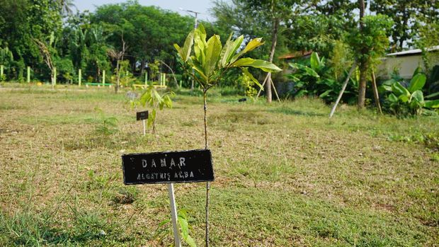 Salah satu tanaman yang dianggap langka
