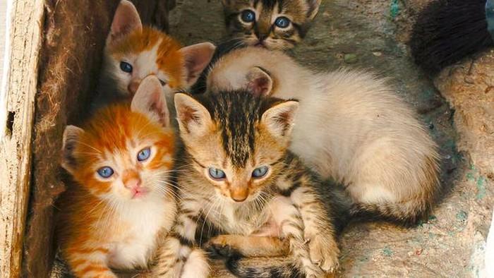 Kucing-kucing yang ditangkapi untuk dijual dagingnya. (Foto: iStock)